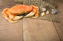 Crabe de Dungeness prêt à cuisiner Images stock