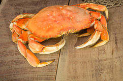 Crabe de Dungeness prêt à cuisiner Photos libres de droits
