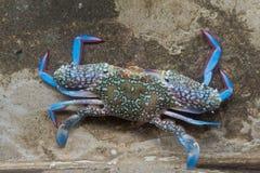 Crabe de fleur Photo libre de droits