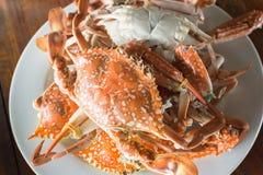 Crabe de fleur Photographie stock libre de droits