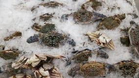 Crabe de fruits de mer d'océan images libres de droits