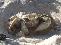 Crabe de Ghost dissimulant Photos libres de droits