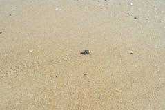 Crabe de Ghost marchant sur la plage sablonneuse photographie stock libre de droits