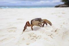 Crabe de kai de Poo sur la plage blanche de sable de la nation similan d'île de tachai Photos libres de droits