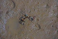 Crabe de mère et d'enfant Photo stock
