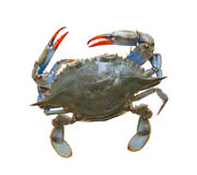 Crabe de mer Images stock