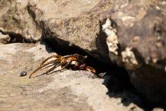 Crabe de plage images stock