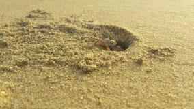 Crabe de plage Photographie stock libre de droits