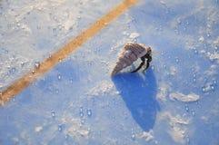 Crabe de planche de surfing Image stock
