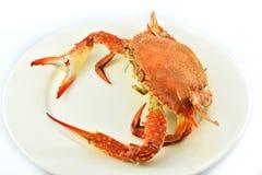 Crabe de plaque Photos libres de droits