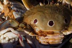 Crabe de trois yeux Photos libres de droits