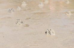 Crabe de trou sur la plage Photographie stock libre de droits