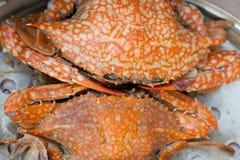 Crabe de vapeur Photos libres de droits