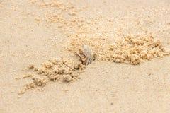 Crabe de violoneur photographie stock