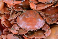 Crabe dentelé cuit à la vapeur de boue de fin, crabe de palétuvier images stock