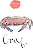 Crabe dentelé de boue illustration de vecteur