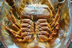 Crabe en fer à cheval brûlé pour faire cuire la fin  photo libre de droits