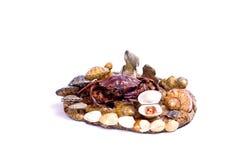 Crabe et coquille de coque Photos libres de droits