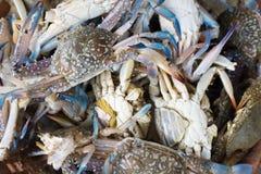 Crabe frais dans le panier Photo stock