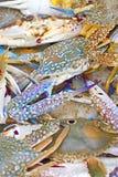 Crabe frais dans un panier sur le marché Photographie stock libre de droits
