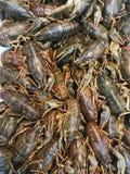 Crabe frais sur la glace photos libres de droits