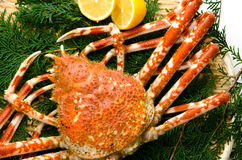 Crabe géant Image libre de droits