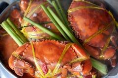 Crabe géant cuit à la vapeur de mer Photographie stock