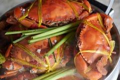 Crabe géant cuit à la vapeur de mer Images libres de droits