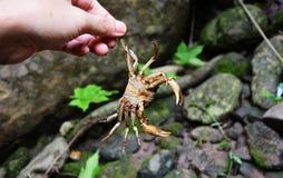 Crabe holded à la main Photographie stock libre de droits