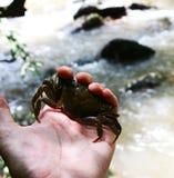 Crabe holded à la main Photo libre de droits