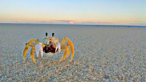 Crabe jaune Photo stock