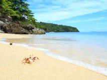 Crabe Landcape sur la plage tropicale, Sulawesi Image libre de droits