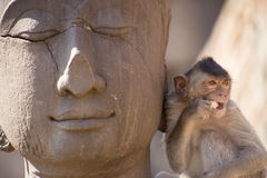 Crabe mangeant le macaque sur la statue de Bouddha Images libres de droits