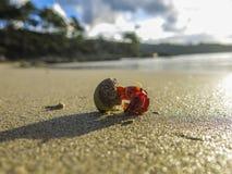 Crabe marchant dans une plage, Espagne Photo stock