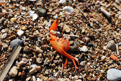 Crabe mort sur la plage photo stock