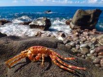 Crabe par l'océan Image libre de droits
