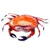 Crabe. peinture d'aquarelle Images stock