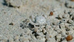 Crabe pr?s de son trou clips vidéos