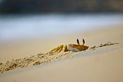 Crabe regardant de son trou Photographie stock libre de droits