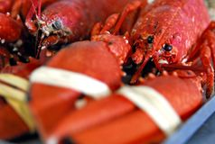 Crabe rouge photographie stock