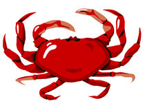 Crabe rouge Photo stock