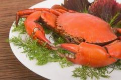 Crabe rouge cuit à la vapeur Images libres de droits