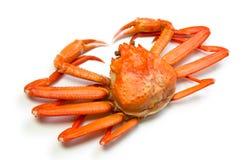 Crabe rouge de neige Image libre de droits