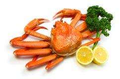 Crabe rouge de neige Photos stock