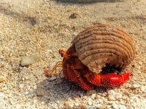 Crabe rouge lumineux à Shell sur la plage Images stock
