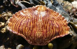 Crabe Shell Photo stock