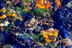 Crabe sous-marin Image stock