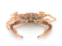 Crabe sous tension Photos libres de droits