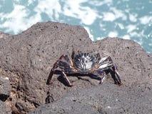 Crabe sur des roches par l'océan Image libre de droits