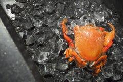 Crabe sur la glace photos libres de droits